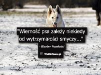 wiernosc-psa