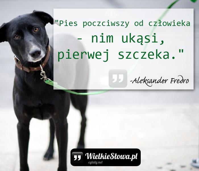 pies=poczciwszy-od-czlowieka