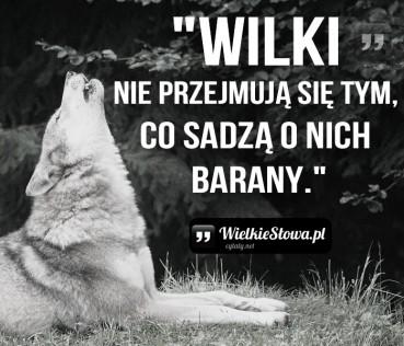 Wilki nie przejmują się tym, co sadzą…