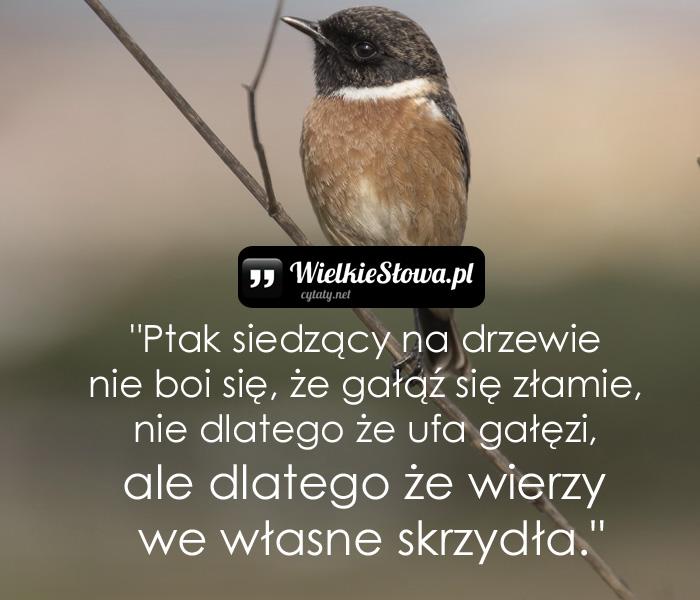 ptak-siedzacy-na-drzewie-nie-boi-sie-ze-galaz-sie-zlamie-nie-dlatego-ze