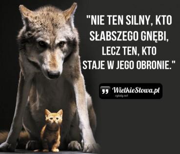 Nie ten silny, kto słabszego gnębi…