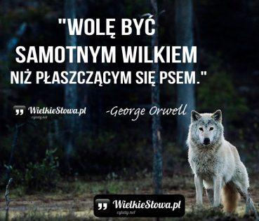 Wolę być samotnym wilkiem niż…