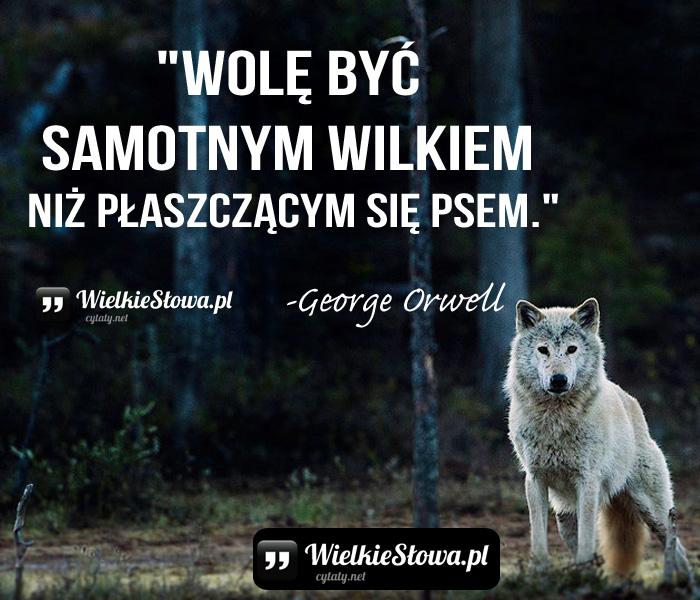 wole-byc-samotnym-wilkiem-niz-plaszczacym-sie-psem
