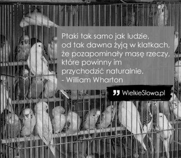 Ptaki tak samo jak ludzie…