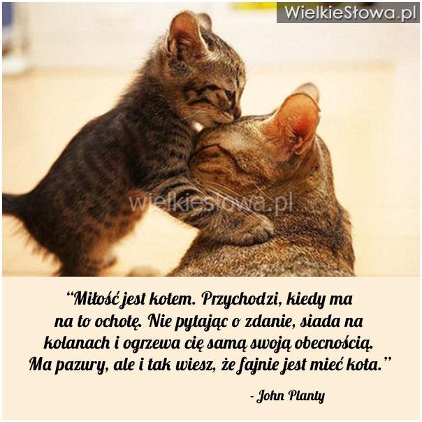 Miłość jest kotem. Przychodzi...