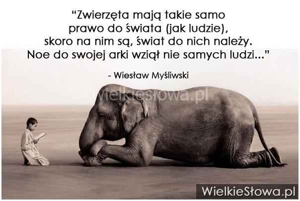 Zwierzęta Mają Takie Samo Prawo Do świata Wielkiesłowa